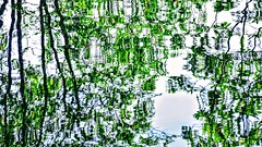 Green Reflection (pmorris73) Tags: arboretum pennstateuniversity statecollege pennsylvania century 2cb1919 3cb2019 4cb2019 5cb2119 6cb2219 7cb2219 8cb2619 9cb2619 1kb2619