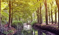 Reflactions (Jenne Barneveld) Tags: reflection reflections water waterreflections trees tree leaves forest woods walking morningwalk morning netherlands