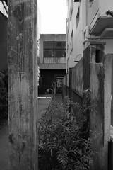 RICOH GR 44 no crop (HAMACHI!) Tags: tokyo 2019 japan ricoh ricohgriii ricohimaging ricohgr gr gr3 griii loadtest cameratest monochrome blackandwhite shibuya architecture exterior