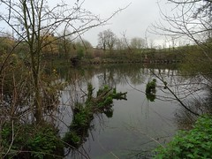 Life from death (Phil Gayton) Tags: water tree plant sky cloud river dart totnes devon uk