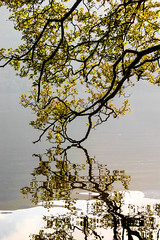 Calm Morning (stephenbryan825) Tags: cumbria england lakedistrict nationalparks uk art backlighting backlit branches calm lake leaves morning peace reflection trees water
