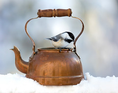 On the Kettle (dshoning) Tags: odc bird kettle winter snow chickadee january copper nature antiques