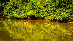 boy in the green river (tattie62) Tags: srilanka people boy bathing river green forest jungle ripples happy happiness poverty reflection