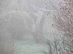 Thursday, 14th, The fog is hanging around IMG_2759 (tomylees) Tags: essex morning winter valentine february 2019 14th thursday garden fog
