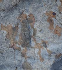 DSC_4460 (2) (jgdav) Tags: macro ancient quartz pigment blue ochre rock image america