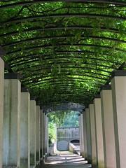 au-parc-de-Bercy-verdure© (alexandrarougeron) Tags: photo alexandra rougeron nature plante environnement flickr