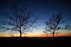 Romagna (lorenzog.) Tags: romagna emiliaromagna faenza pideura sunset bluehour trees cameraphone honor italy vividcolours contrast