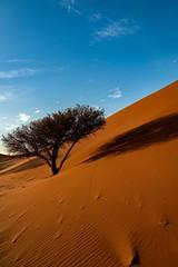 """The Tree Of Life"" Namibia (cristiancoser) Tags: landscape desert red tree sand patterns amazing breathtaking colours beatiful nikon flickr flickrtoday impressive blue sunrise light travel travelphotography namibia photography professional"