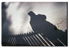 Leica CM 2019-03-26 _ 04-02 expired film 06-2018 Fuji C200 test roll_080 (nefotografas) Tags: leicacm summarit40mm expiredfilm 062018 fujifilmc200 c41 testroll firstroll 35mmfilm vilnius lithuania leicalens nefoto self selfie shadowselfie