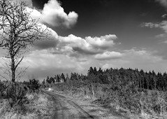 _DSC0164.jpg (The_Achromat) Tags: herbertshausen weg wittgenstein baum landschaft wald berg tree bäume forest wandern hiking bw entenberg bad laasphe trees wanderweg wolken sky himmel strauch sträucher