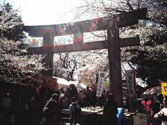 鳥居 (*suika *) Tags: sakura uenotokyo spring traditional light tommyxyaostyle toycamera 桜 上野東照宮 東京都立美術館からの寄り道で お花見 トイカメラ