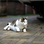 Kat in het zonnetje thumbnail