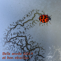 Belle année 2019 - Happy New Year - Auguri (Giancarlo - Foto 4U) Tags: belle année 2019 happy new year auguri giancarlofoto