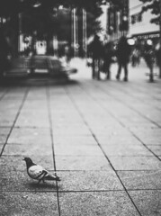 Elvis is about to leave the scene (mripp) Tags: art vintage retro street black white mono monogram urban city pigeon bird fauna