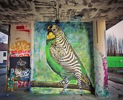 It's freezing, but this artist never stops / new #streetart by #CeePil. . #Gent #Belgium #urbanart #graffitiart #streetartbelgium #graffitibelgium #visitgent #mural #fresquemurale #streetartlovers #graffitiart_daily #streetarteverywhere #streetart_daily # (Ferdinand 'Ferre' Feys) Tags: instagram gent ghent gand belgium belgique belgië streetart artdelarue graffitiart graffiti graff urbanart urbanarte arteurbano ferdinandfeys ceepil