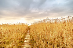 Bottsand_3 (555-nase) Tags: ostsee schleswigholstein sunset sonnenuntergang beach strand sky himmel clouds wolken weg path