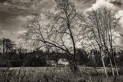 L'autre rive de la clairière (Jean-Marie Lison) Tags: eos80d rhodesaintgenèse forêtdesoignes espinettecentrale arbres prairie clairière maison noiretblanc nb monochrome