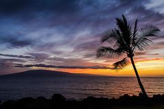 Palm (D-Adams) Tags: palm tree sunset maui vacation ocean landscape sea nikon d7100 beach island hawaii