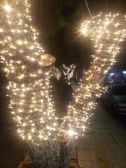 20181213_gennimata (Regine G.) Tags: golden brightlights christmas treetrunk road