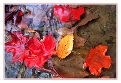 Autumn Leaves at the Water's Edge (sjb4photos) Tags: autumn autumnleaves epsonv500