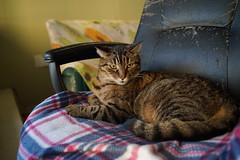 DSC01045 (iocatco) Tags: cat kitten cats sony a7