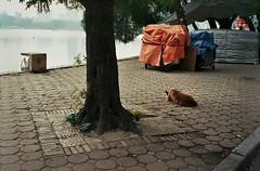 by the lake (InSoManyWords) Tags: film fujisuperia200 fujifilm 35mm rollei35 streetphotography hanoi vietnam