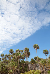 Guanahacabibes Palms (peterkelly) Tags: digital northamerica cubalibre cuba gadventures canon 6d guanahacabibespeninsulanationalpark rock cliff palm trees blue sky clouds
