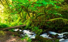 Perfection is attained by slow degrees; it requires the hand of time… (ferpectshotz) Tags: wahkeenafalls fairyfalls wahkeenacanyon wahkeenacreek columbiarivergorge oregon creek river green longexposure hike trail bridge