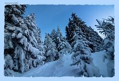 Neige , neige , neige... (jamesreed68) Tags: forêts neige cold hiver winter alpes alps mountain tavé pleureur suisse valais brunet paysage nature schweiz swiss switzerland ciel montagne
