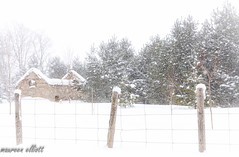 Beyond The Fence (maureen.elliott) Tags: happyfencefriday hff fence winterlandscape barn snow ruin architecture