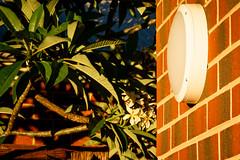 Light and leaves (.Stephen..Brennan.) Tags: da70 foliage pentax pentaxk3 perth westernaustralia australia au 70mm