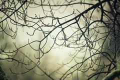 Rainy Days (flashfix) Tags: february242019 2019inphotos flashfix flashfixphotography ottawa ontario canada nikond7100 55mm300mm tree branches droplets ice bokeh nature spooky mothernature rain rainyday gloomy lines