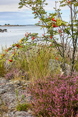 IMG_2746-1 (Andre56154) Tags: schweden sweden sverige landschaft landscape heide küste coast wasser water