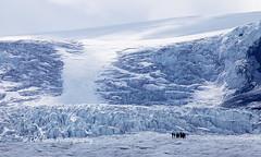 Athabasca Glacier (PhotoDG) Tags: athabascaglacier glacier columbiaicefield icefieldparkway canadianrockies therockies rockymountains banffnationalpark jaspernationalpark nationalpark snow telephoto landscape ef100400mmf4556lisusm mountathabasca athabasca 冰川