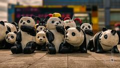 Shenzhen, wooden pandas (China) #15, 11-2018, (Vlad Meytin, vladsm.com) (Instagram: vlad.meytin) Tags: china khimporiumco meytin shenzhen vladmeytin asia city panda pandas photography pictures streetlife streetphotography streetscene streets urban vladsm vladsmcom woodenpandas 中国 中國 深圳 guangdong cn