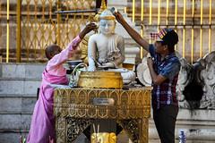 Pouring Water Offerings Over The Buddha At The Shwedagon (El-Branden Brazil) Tags: myanmar burma burmese nun monks buddhism buddhist southeastasia asian asia yangon shwedagon