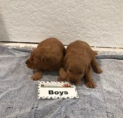 Annie Boys pic 4 3-9