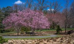 A7307537 (jhallen59) Tags: chanticleer radnor pennsylvania garden spring