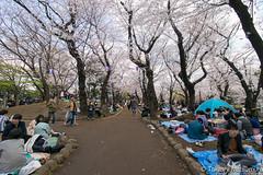 Asukayama Park (takashi_matsumura) Tags: asukayama park oji kitaku tokyo japan ngc nikon d5300 飛鳥山 王子 北区 東京 桜 sakura cherry blossoms afp dx nikkor 1020mm f4556g vr