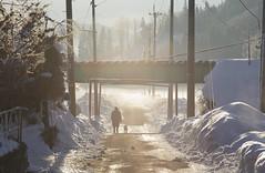 3178 (Keiichi T) Tags: 6d road dog スナップショット 朝 道 winter 靄 shadow eos haze canon 人 光 日本 影 snow 冬 雪 スナップ snapshot 犬 morning snap japan people light