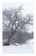 SHF_5323_Winter (Tuan Râu) Tags: 1dmarkiii 14mm 100mm 1d 1dx 2470mm 2019 2018 50mm 70200mm canon canon1d canoneos1dmarkiii canoneos1dx canada quebec snow snowing cold tree trees house landscape white tuanrau tuan tuấnrâu2018 httpswwwfacebookcomrautuan71