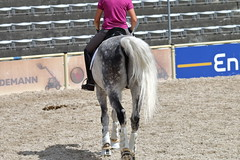 _MG_6553 (dreiwn) Tags: dressurprüfung dressurreiten dressurpferd ridingarena reitturnier reiten reitplatz reitverein reitsport ridingclub equestrian horse horseback horseriding horseshow pferdesport pferd pony pferde dressur dressuur dressyr dressage