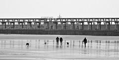 Dog Walkers and Harbour Staithes (Gilli8888) Tags: nikon p900 coolpix blyth northumberland portofblyth docks port quayside beach sea northsea blythbeach harbour staithes dogwalkers dogs linear angles geometric northeast blackandwhite