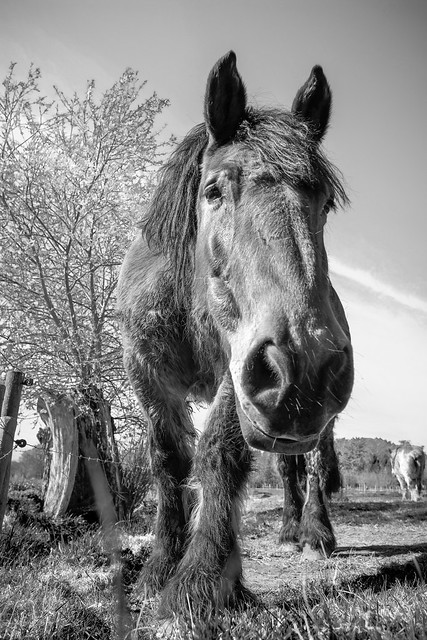 Horse coming closer