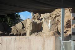 IMG_12136 (mudsharkalex) Tags: california sandiego sandiegoca seaworld seaworldsandiego bird birds