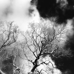 magical oak (Jos Mecklenfeld) Tags: paganism pagan bos forest natuur nature eik oak