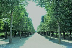 Jardin des Tuileries (lazy south's travels) Tags: paris france french urban park capital city boulevard tree trees summer sun green shadows line path