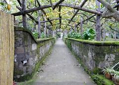 I Giardini di Cataldo Lemon Grove (chdphd) Tags: igiardinidicataldo sorrento campania italy