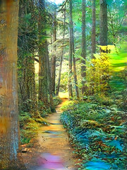 Dreamy Trails (Eclectic Jack) Tags: ddg generator dream deep processing processed process post manipulated forest tree trail green peaceful tranqul blue purple