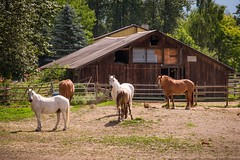Horses (MIKOFOX ⌘ Check Out My Albums) Tags: canada britishcolumbia barn showyourexif xt2 learnfromexif july landscape provia fence fujifilmxt2 mikofox summer horse xf18135mmf3556rlmoiswr